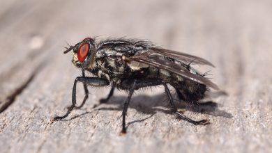 Photo of Do We Really Need Flies?