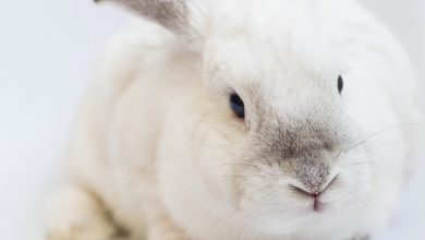 Photo of OPINION: Why Bunnies Are The Best