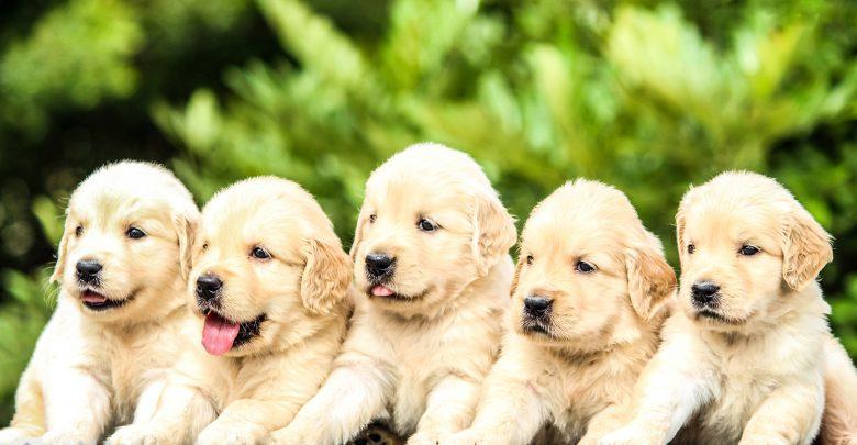 Photo of Woof Woof! It's International Dog Day!