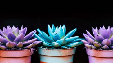 Photo of Grace's Gardening Blog: Succulents